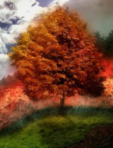 flaming tree, akashic records, channeling